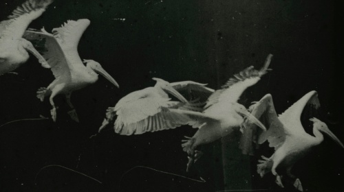 Opening of the 15th season. Etienne-Jules Marey