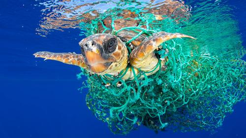 Travel the world through underwater photography