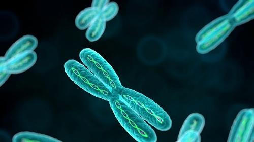 La síndrome de Down: una història de cromosomes