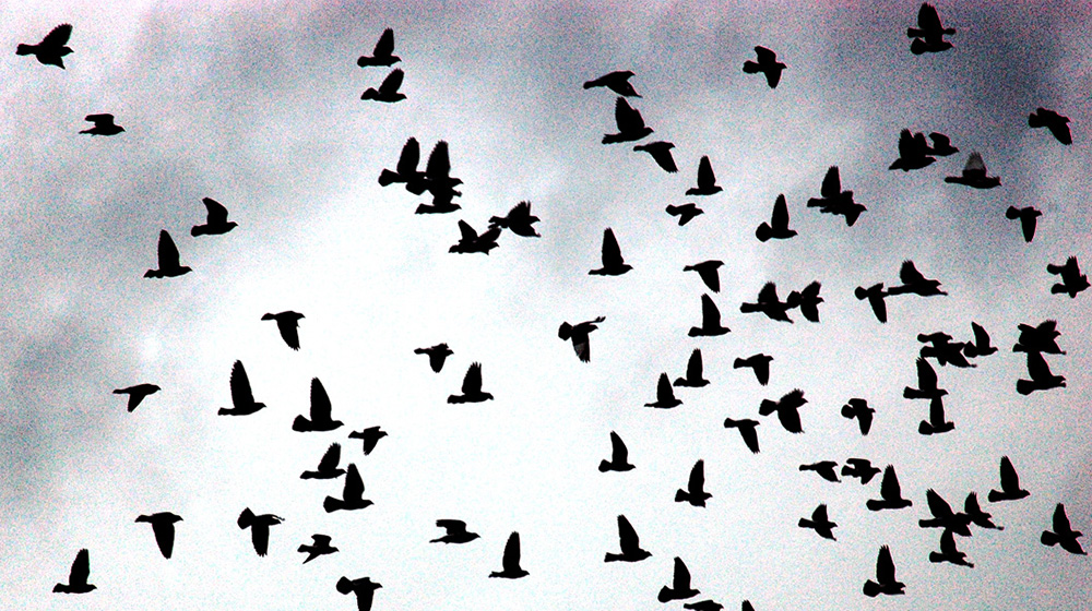 Flock of Birds by Picture Perfect Pose.  CC BY