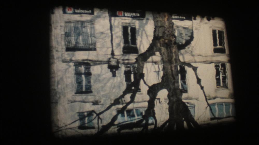 Imagen de la actividad:Helga Fanderl. Films 2000-2016