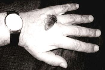 """Cinc """"esdeveniments crucials"""" a la vida de W. G. Sebald"""