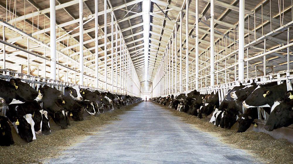 Imatge de: The Milk System. Un documental d'Andreas Pichler