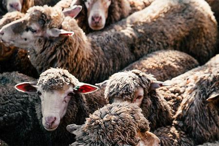 El futuro de los derechos animales