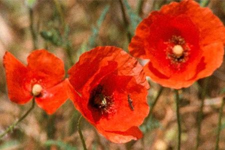 Rose Lowder. «Bouquets 1-10» por Gloria Vilches