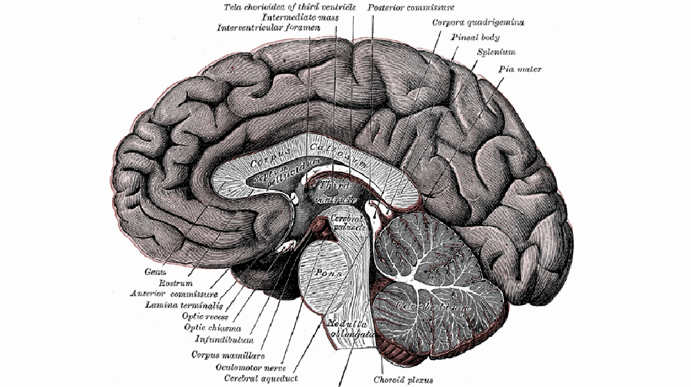 image of the activitythe brain