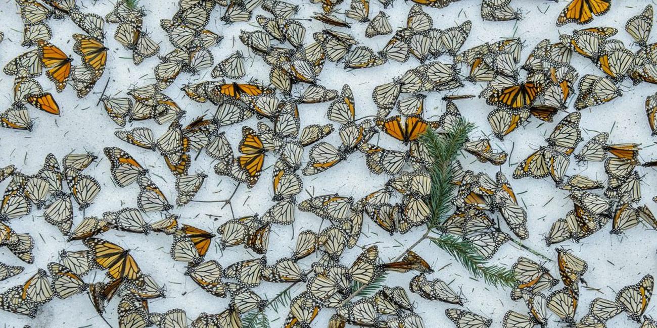 Imagen de: Más allá de las imágenes: proteger la naturaleza foto a foto