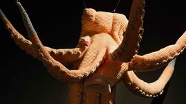 Petra Maitz, Octopus, 1998 | © CCCB, 2021 La Fotogràfica