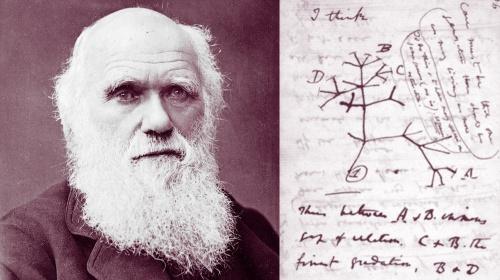 Revolución 6/6. Antonio Fontdevila lee Charles Darwin