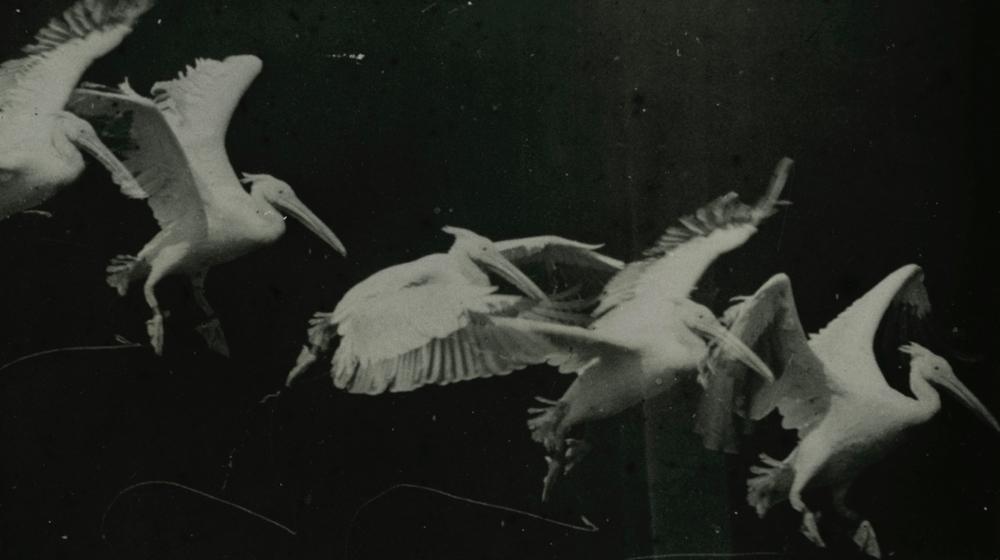 Fotograma de un filme de Étienne-Jules Marey