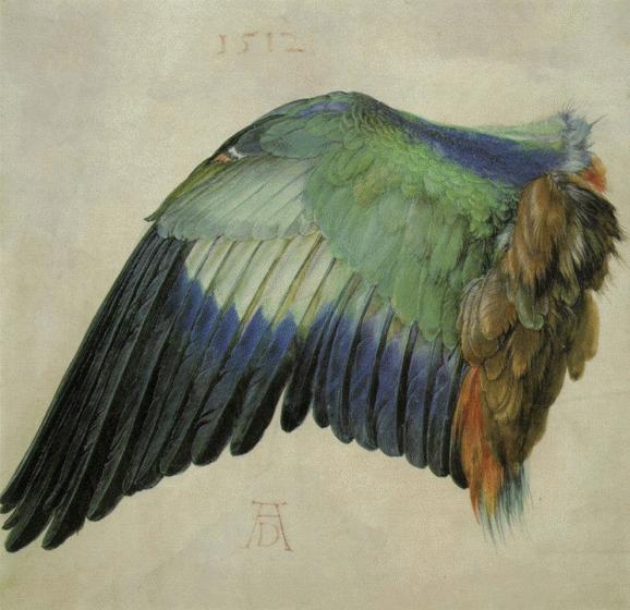 Fügel einer Blaurake, 1512, Vienna, Graphische Sammlung Albertina