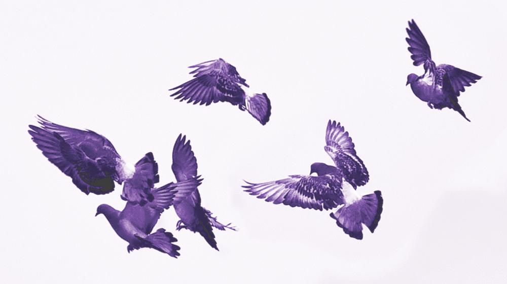 Birds in Black & White by MissMae | Flickr | CC BY-NC-SA 2.0