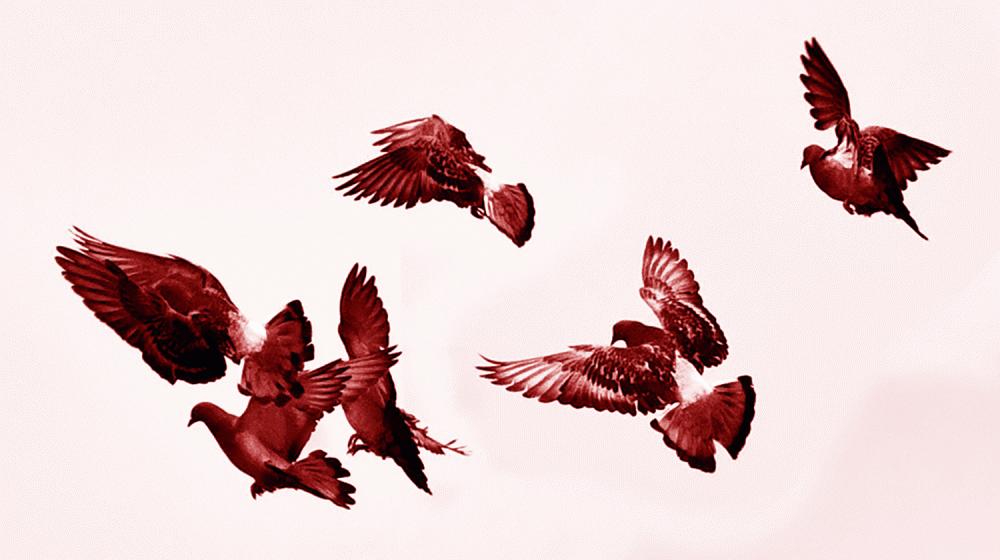Birds in Black & White by MissMae   Flickr   CC BY-NC-SA 2.0