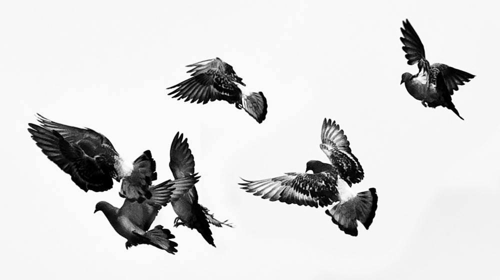 Birds in Black & White by MissMae | Flickr | CC BY-NC-SA 2.0