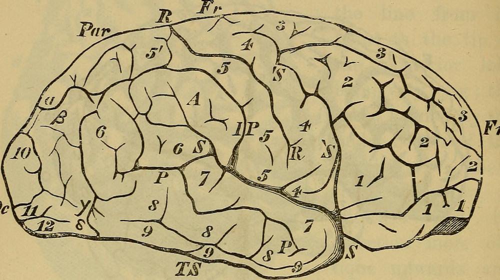 """The brain as an organ of mind"" (1880)"