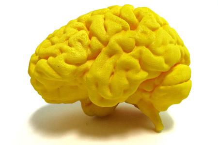 El cervell