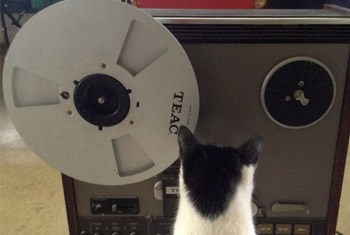 Zeppelin 2014: Memòries acusmàtiques