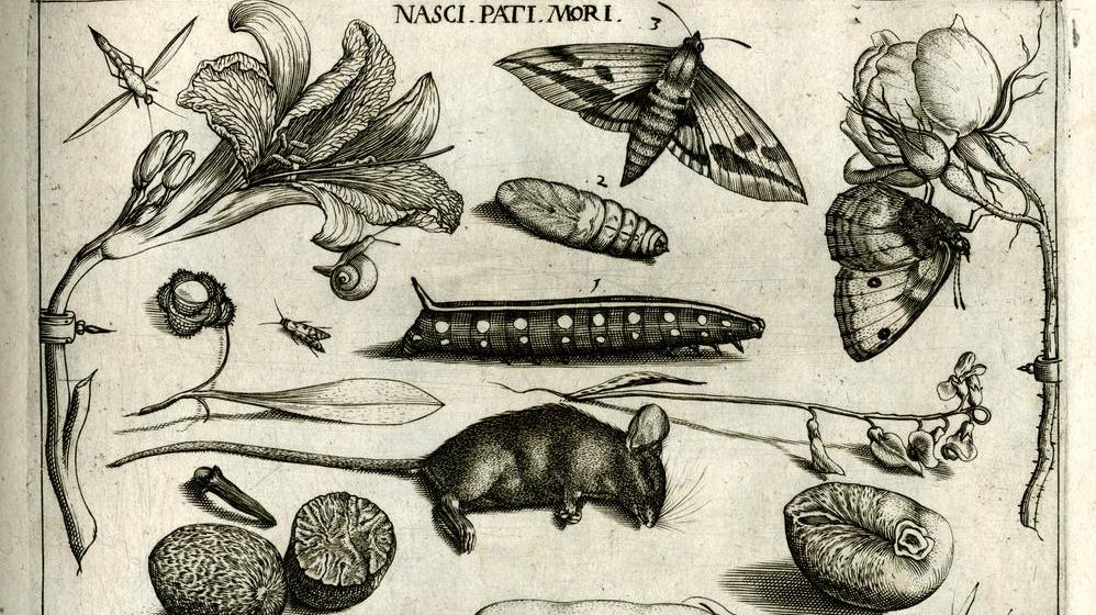 Joris and Jacob Hoefnagel Art and Science around 1600